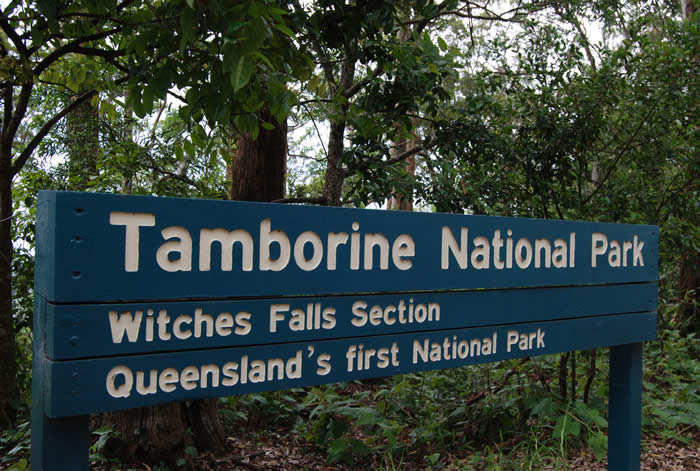 Witches Falls Section of Mt Tamborine National Park