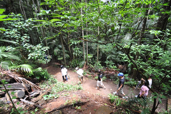 Join Southern Cross 4WD on a Rainforest Night Walk