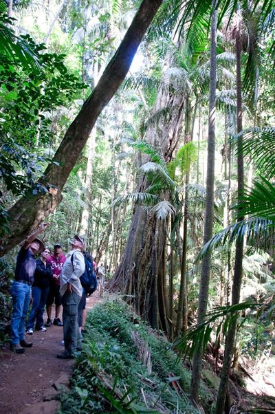Guide explains about the Rainforest