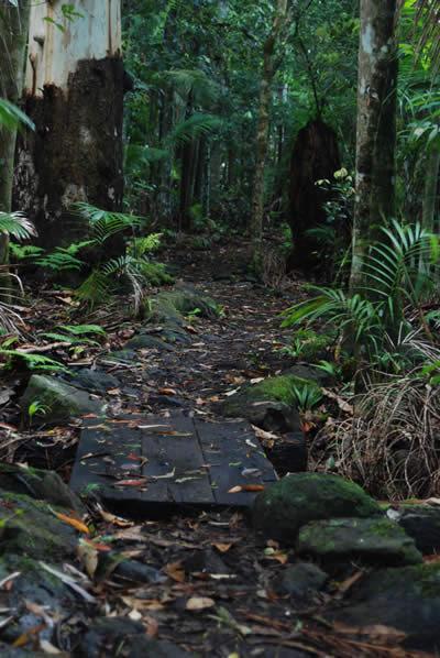 Nightfall in the Tamborine Mountain Rainforest