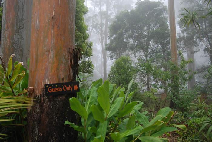 Mist hanging between the trees on Tamborine Mountain - Crisp and Fresh