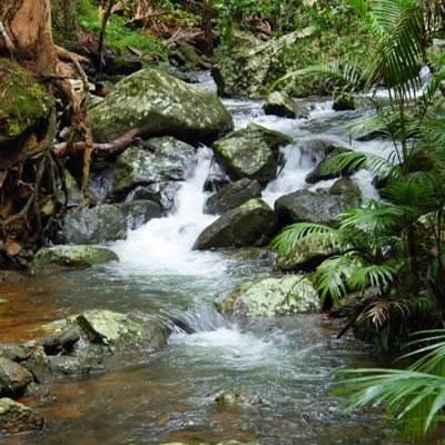 Fast Flowing Clear Creek on Mount Tamborine