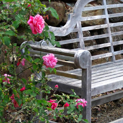 Mt Tamborine's own Botanical Gardens is home to a Rose Garden