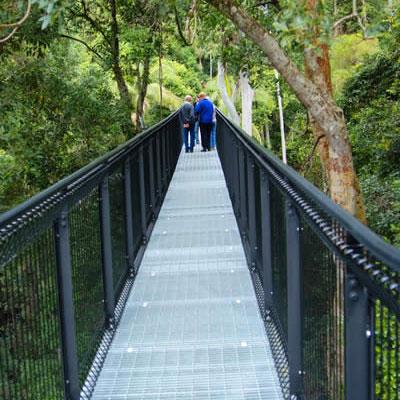 View of Tamborine Mountain Rainforest Skywalk