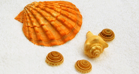 Beautiful Energy from the Shells - Sea Shell Massage