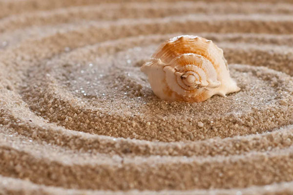 sea-shell-massage-package-shell