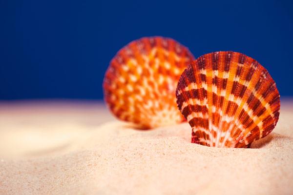 sea-shells-on-the-beach