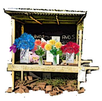 harvest-trail-dhalia-stall