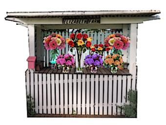 harvest-trail-elizabeths-flower-stall