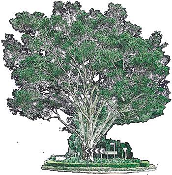 walking-trail-fig-tree-gallery-walk