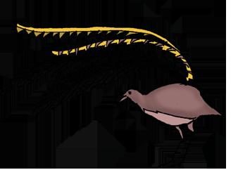 walking-trail-albert-lyrebird
