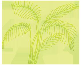 walk-to-a-waterfall-walking-stick-palm