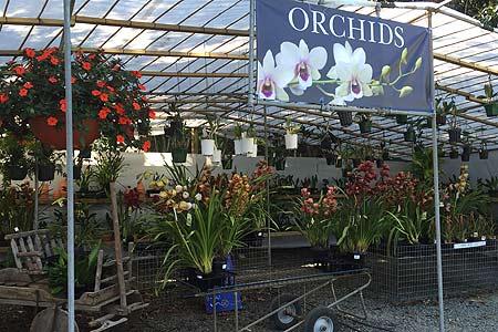 tamborine-mountain-nursery-orchid-house