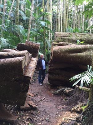 walking-trail-palm-grove-np-giant-tree