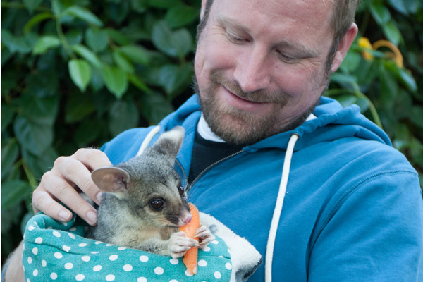 guest with reba the brushtail possum