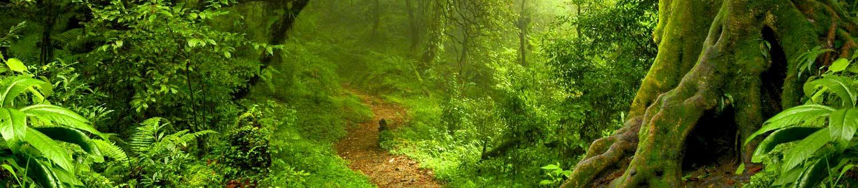 A Walk In The Park Tamborine Mountain