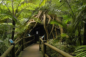Entrance Glow Worm Cave Tamborine Mountain