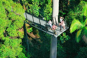 People up high on the Tamborine Rainforest Skywalk - Cantilever from Heli