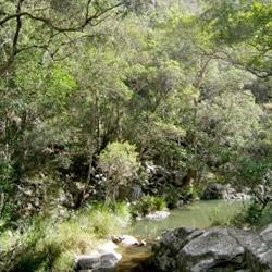 Cedar Creek Falls Walking Track To Rock Pools
