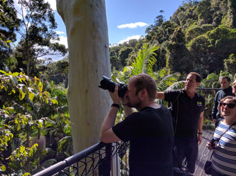 Group taking photos from Rainforest Skywalk Lookout