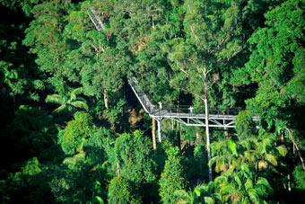 Platforms Tamborine Mountain Rainforest Skywalk