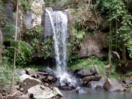 Curtis Falls in Tamborine National Park