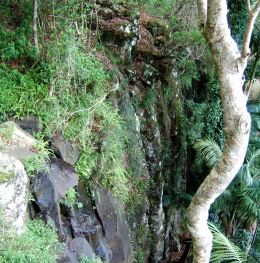 Rainforest Witches Falls Circuit