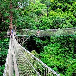 Treetop walkway Tamborine Mountain